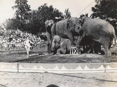 elephant performance in parking lot